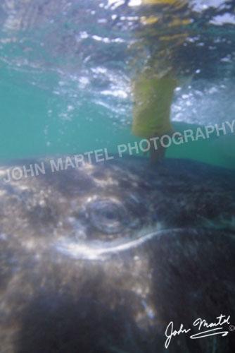 john-martel-petting-whale2