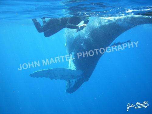 john-martel-underwater-whale
