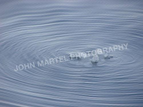 john-martel-artic-water-ice-swirls